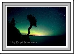 Star sky and northern lights, Spirit Tree, Grand Marais, Minnesota