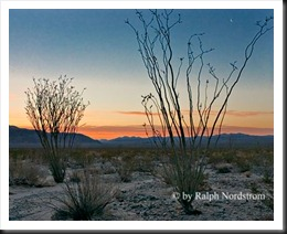 Ocotillo Patch Morning