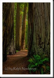 redwoods_130528__SM36093_4_5_6_7-Edit