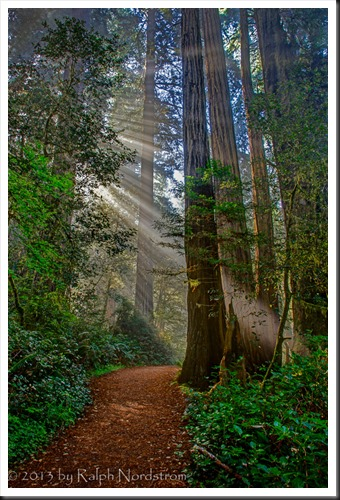 redwood_grove_trail_130427_rrpm_rc50