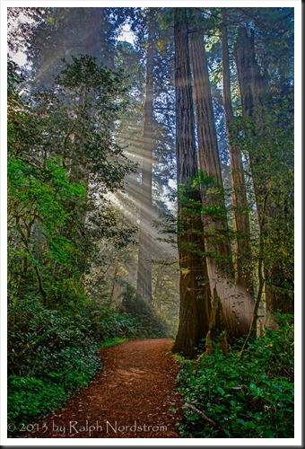 redwoods_130427__SM35921_2_3_4_5-Edit