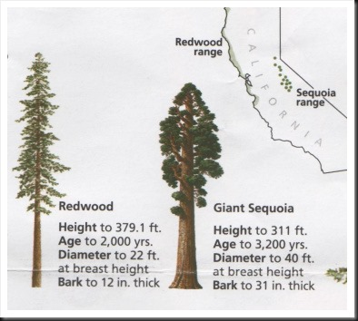 redwood trees california map with Photograph Coastal Redwoods on Ultimate Hotel Guide Next California Vacation also 14650 besides Photograph Coastal Redwoods besides Yellowstone National Park further Sequoia National Park Created.