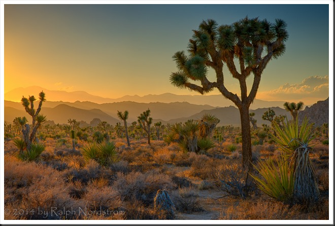 joshua_tree_140920__SM32515_6_7_8_9-Edit