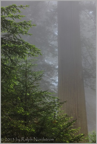 lord-of-the-fog-redwoods_140526__SM30293