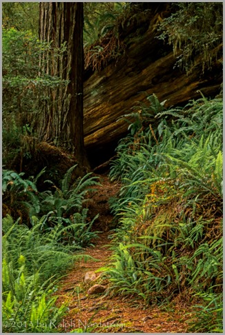 trail-in-the-grove-redwoods_140527__SM30412-Edit