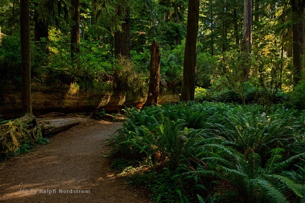Peaceful moment redwoods 160803 SM3129